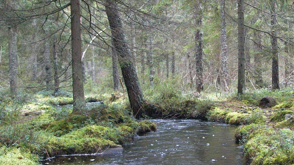 Laserskanning av hela Sverige – ska bli nya kartor över vattendrag